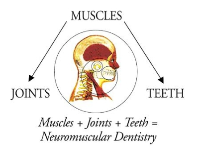 A chart illustrating the relation of muscles, joints, and teeth with TMJ Disorder