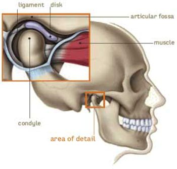 Diagram of TMJ